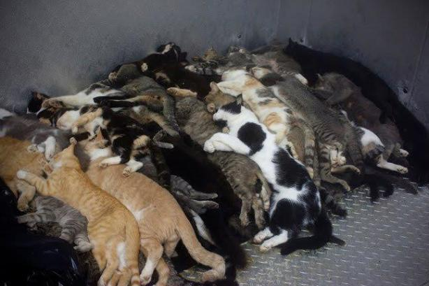 The dead, piled up at a shelter.