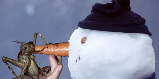 Snowmen everywhere are in big trouble.