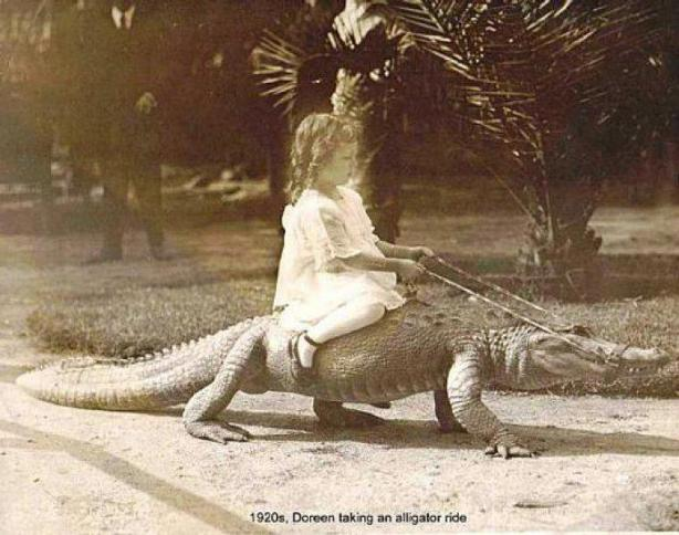 1920s, Doreen taking an alligator ride.