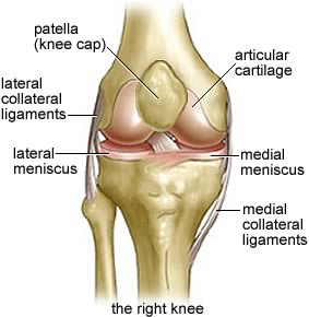 lateral collateral ligaments