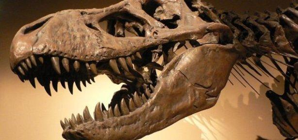 A Tyrannosaurus rex skull. Image Credit: CC BY-SA 3.0 David Monniaux